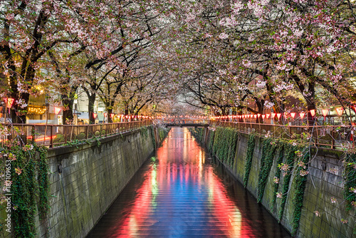 Fotobehang Tokyo Cherry blossom trees in Tokyo, Japan