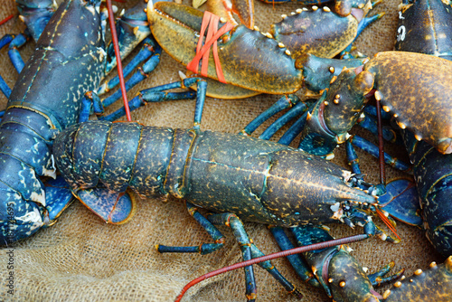 Photo Blue Breton lobster at a seafood market in Brittany