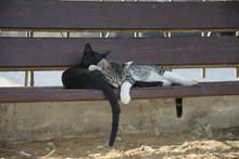 Dwa Przytulone Do Siebie Koty ...