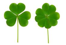 Clover Four Leaf For Saint Pat...