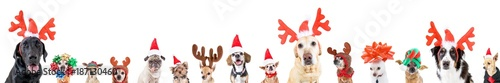 Valokuva group of various dog breeds with different christmas hats or costumes on an isol