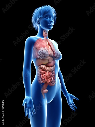 Female Internal Organs Illustration Buy This Stock Photo And
