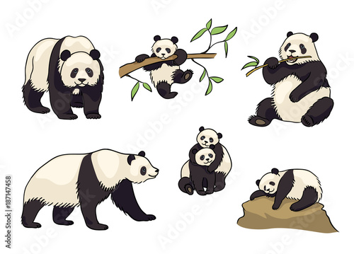 Fototapeta premium Zestaw ilustracji wektorowych Pandy