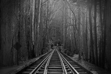 Black And White Photography Of Train Tracks Or Rail Roads In The Magical Fantasy Forest