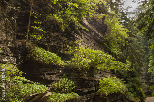 NYS Gorge in Summer 2 Wallpaper Mural