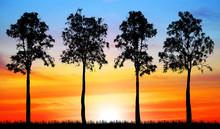 Silhouette Tree On Sunset