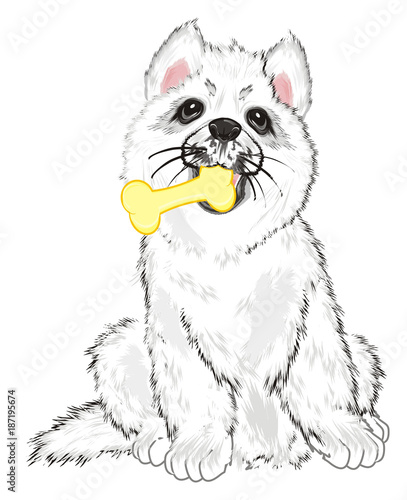 Poster Croquis dessinés à la main des animaux Husky, White Husky, Dog, Puppy, Friend, Pet, Illustration, White Dog, Furry Dog, White Puppy, Husky Puppy, year of dog, hold, food, eat, bone