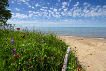 Wildflowers On The Beach Backg...