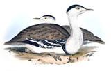 Ilustracja ptaka - 187207471