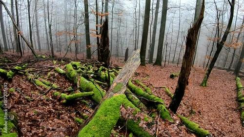 Baumzersetzung durch pilze
