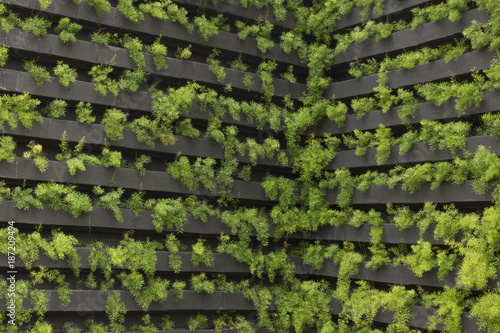 Fotografia  Vertical garden with young plants growing