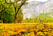View of Yosemite Valley in Yosemite National Park in autumn.