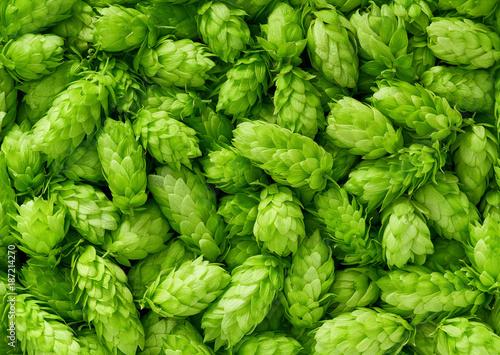 hop cones , top view