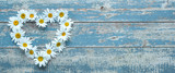 Daisy flowers on wooden background