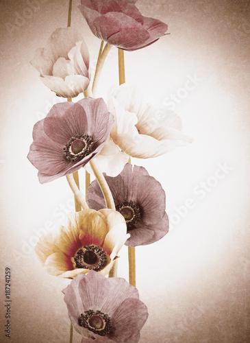 orchid-kwiaty-efekt-vintage