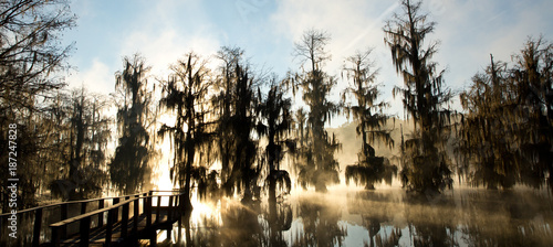 Poster Landscapes View of landscape bayou at sunrise in fog