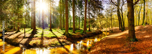 Fototapeten Wald Beautiful autumn forest with stream and bright sun shining through the trees