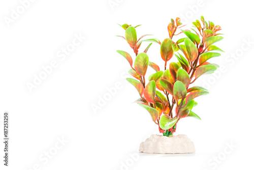 Fototapeta artificial aquarium plants isolated on white background obraz na płótnie