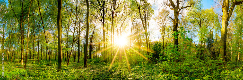 Fototapety, obrazy: Spring in the forest with bright sun shining through the trees