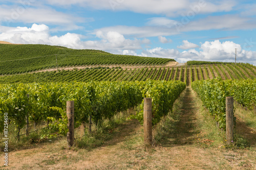 Poster Wijngaard New Zealand countryside with vineyard and blue sky