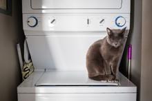 Pet Friendly Home Washing Mach...