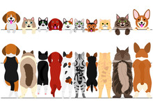 Standing Small Dogs And Cats F...