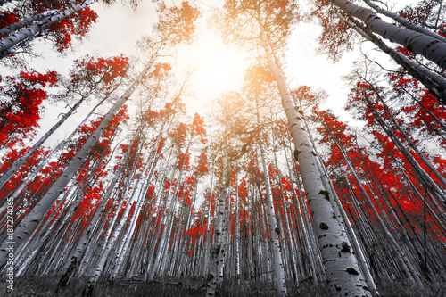 Sunlight shines through the leaves of tall red trees in a thick mountain forest