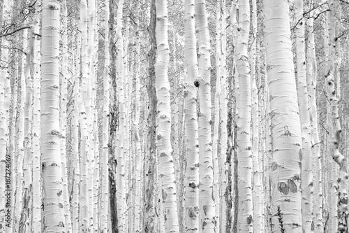 do-sypialni-czarno-biale-drzewa-osiki-tworza