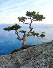 Big Green Pine Tree On The Sea...