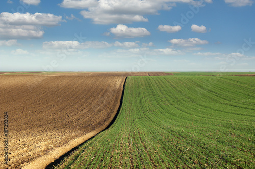 Photo  young green wheat and plowed field landscape spring season agriculture