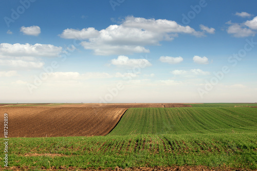 Foto op Plexiglas Cultuur young green wheat and plowed field landscape spring season