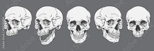 Fotografía  Anatomically correct human skulls set isolated