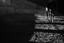 Details Of A Horse Training Wi...