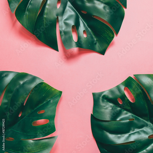 Three tropical palm leaves with empty space in the middle on pink background. mock up. flat lay