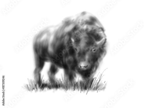 ilustracja-zubr-recznie-rysowany-czarno-bialy