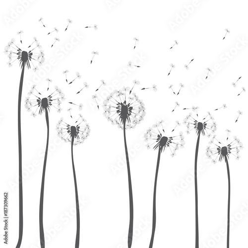 Dandelions Blowing Vector Illustration Of Dark Grey Silhouettes On