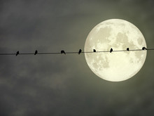 Silhouette Of Birds Hang On Power Electric Line And Super Full Moon
