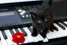 Kitten Sitting On Piano Keys W...