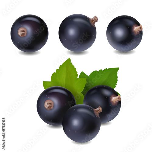 Blackcurrant berry realistic 3d vector illustration Canvas Print