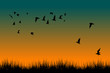 Field of grass and silhouettes of flying birds at sunrise