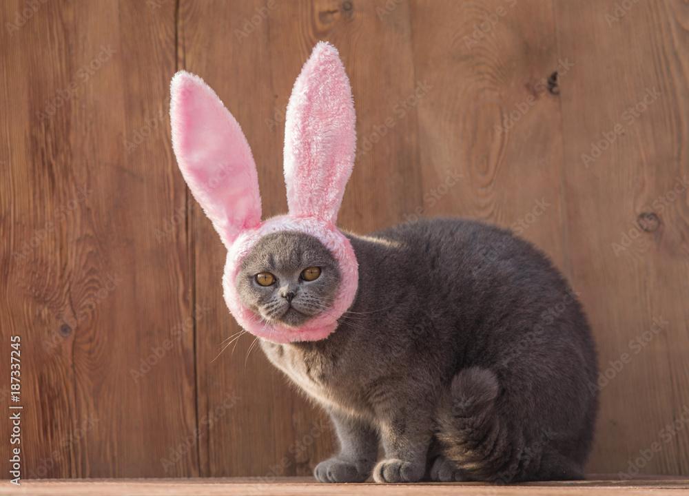 Easter, kitten with rabbit ears