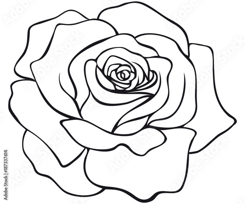red rose blossom coloring page – kaufen Sie diese ...