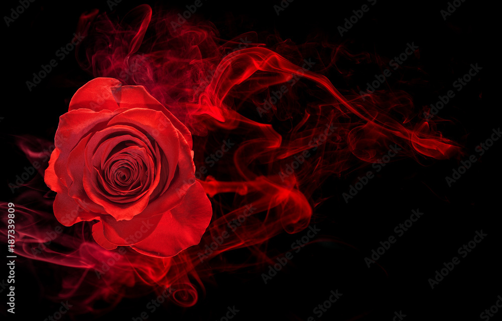 Fototapety, obrazy: rose wrapped in red smoke swirl on black background