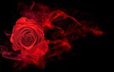róża owinięta w czerwony wir wirować dym na czarnym tle