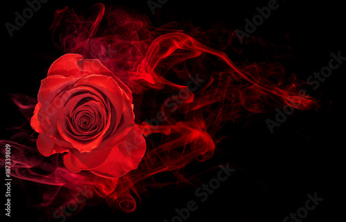 Foto op Canvas Roses rose wrapped in red smoke swirl on black background
