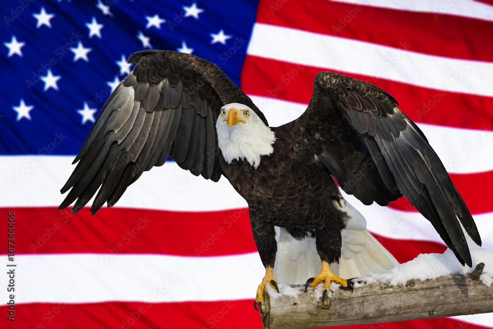 American bald eagle and flag, Digital composite