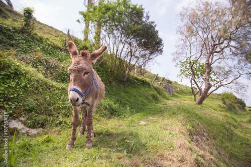 Deurstickers Ezel donkey