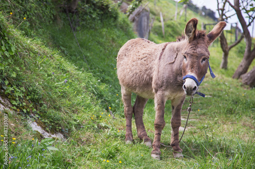 Cadres-photo bureau Ane donkey