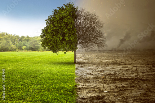 Fotografia  Umweltzerstörung