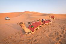 Camel Ride In The Desert.